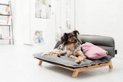 Razy2 Design Group – Dog Den for Mnomo