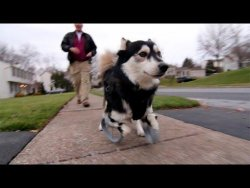 Derby the dog: Running on 3D Printed Prosthetics – YouTube