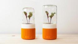 UAU project – GROWW. – the minimal greenhouse