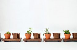 Joyce Lin – Plant Stands