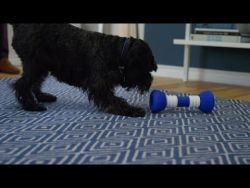 GoBone: All-day play for you and your dog – kickstarter