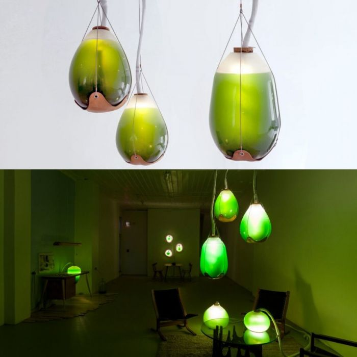 Jacob Douenias, Ethan Frier – Living Things – Photosynthetic furniture