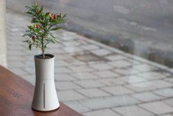 Botanium – Grow Edible Greens. Fast & Effortlessly – Indiegogo