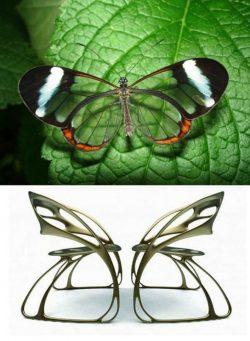 Eduardo García Campos – Butterfly Chair
