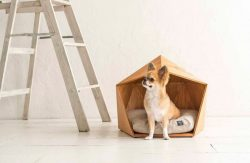 Kamakura Pet House – Wooden hut for cats and dogs