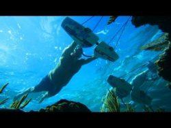 Flying Underwater! – Subwing in 4K | DEVINSUPERTRAMP