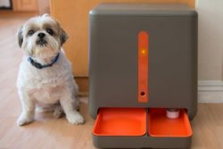 gosh! easyFeed – Automatic Pet Feeder w Webcam and Amazon Delivery