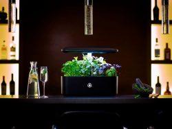 Chase Ando – AVA Byte -Nespresso for Gardening