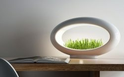 Marko Vuckovic – The Grass Lamp